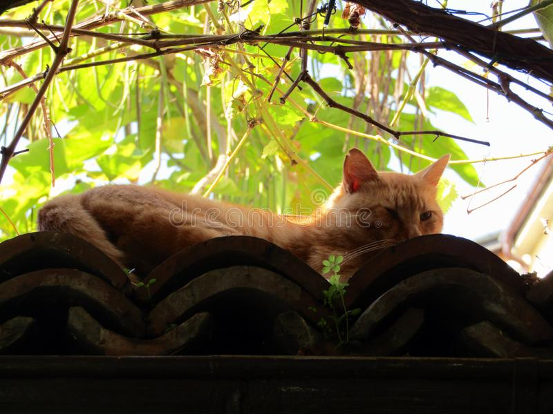 Chat sous les branches photos stock