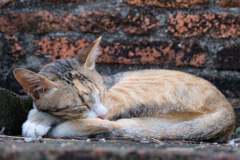 Chat spécial avec le rêve doux dans le temple antique d'Ayutthaya photo stock