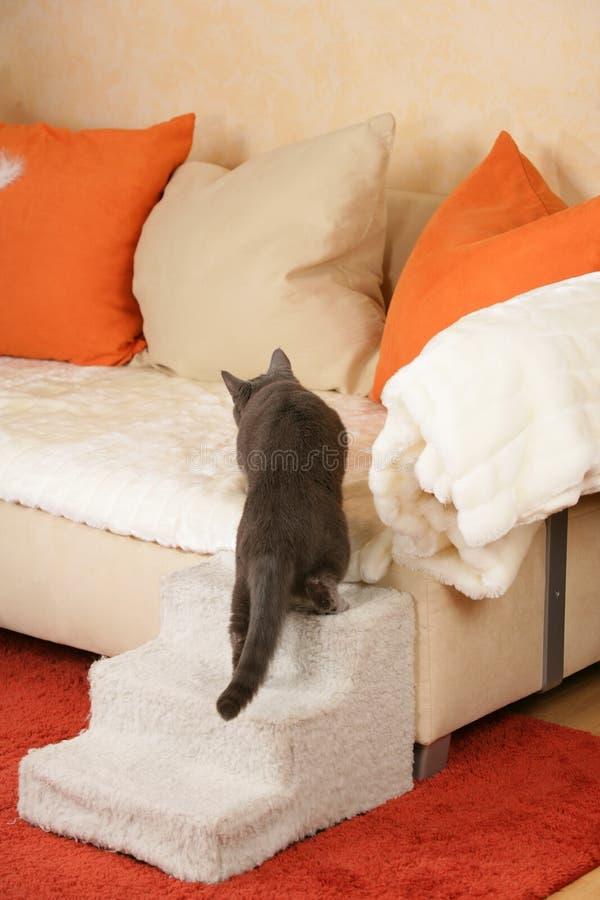 Chat supérieur sur un escalier de chat images stock