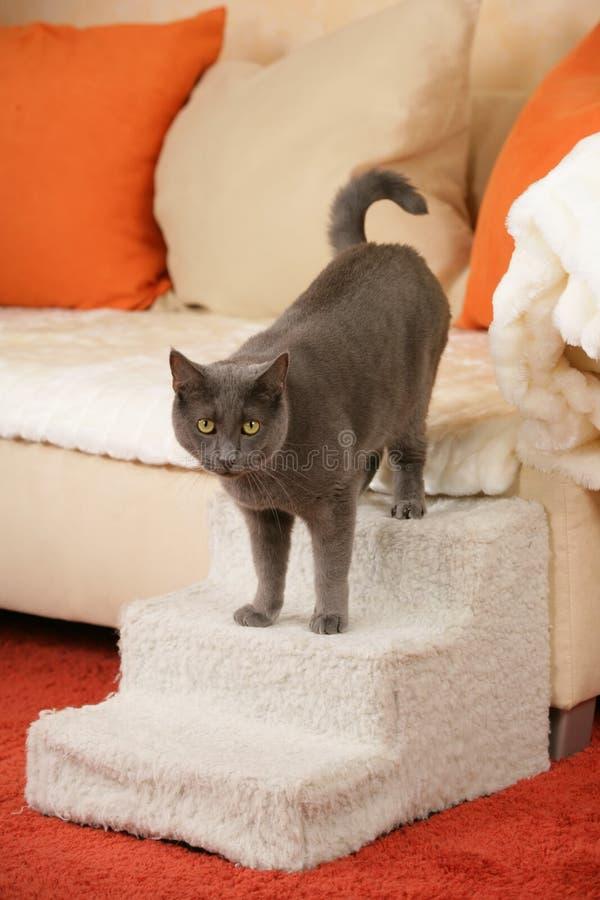 Chat supérieur sur un escalier de chat photo stock