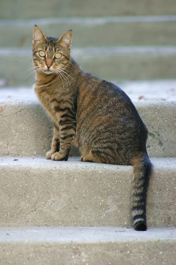 Download Chat sur des escaliers photo stock. Image du escaliers, mignon - 61512