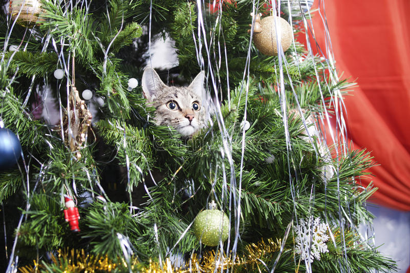 Chat sur l'arbre de Noël An neuf photos stock