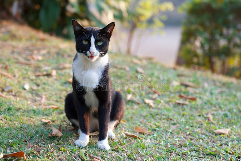Chat sur l'herbe verte photos libres de droits