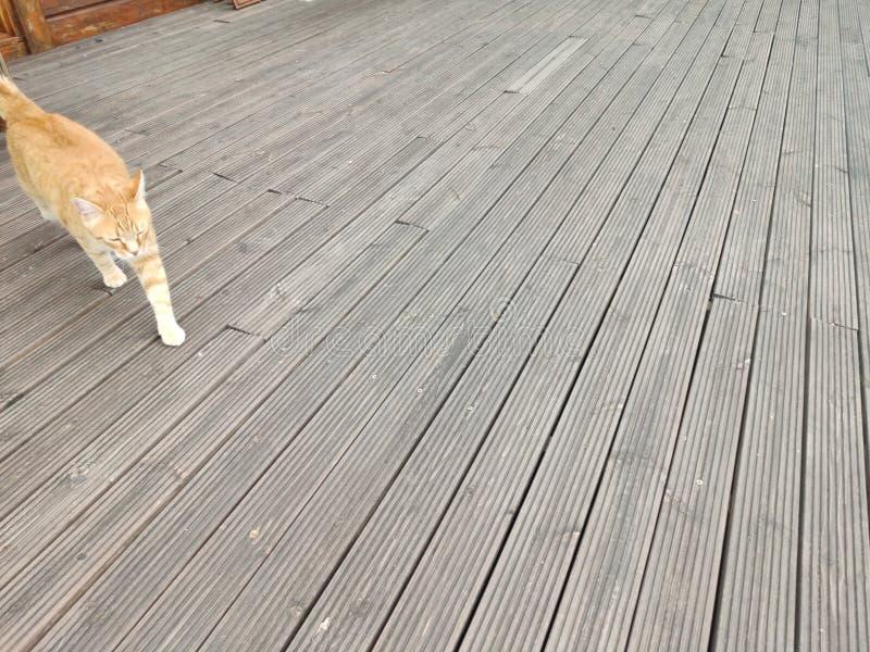 Chat sur la terrasse image stock