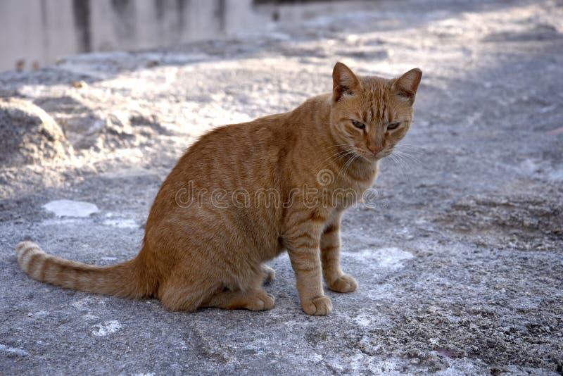 Chat sur le port de Mandraki sur l'île de Rhodes photographie stock libre de droits