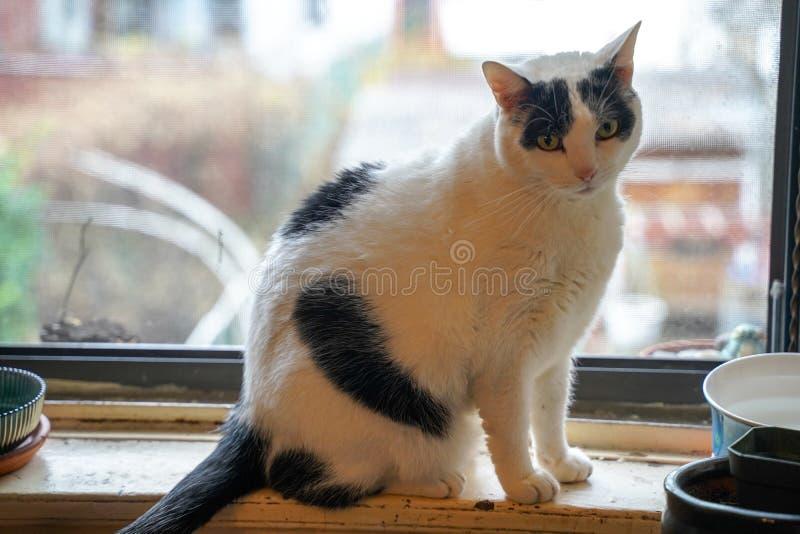 Chat sur le rebord de fenêtre photos libres de droits