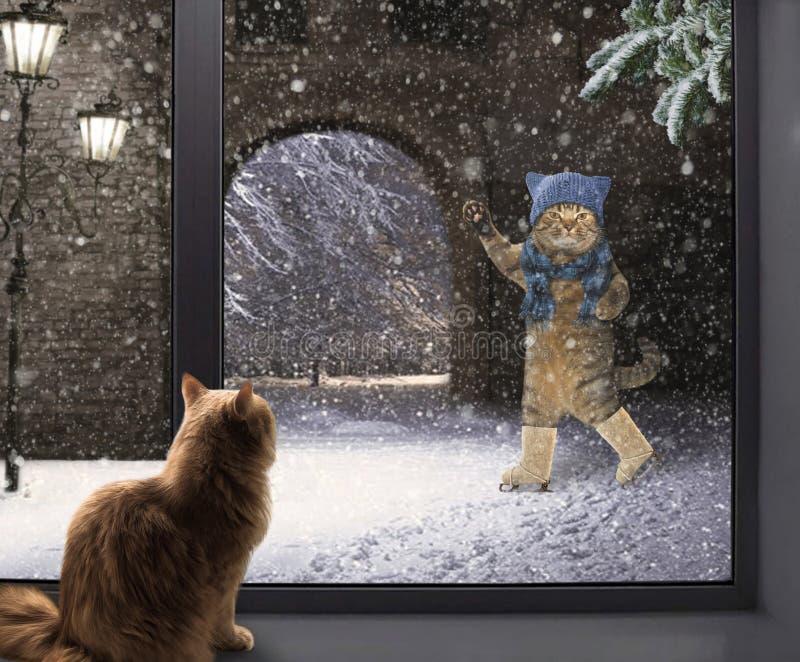 Chat sur le rebord de fenêtre et le patineur photographie stock