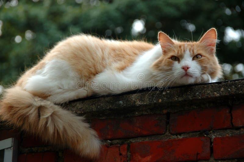Chat sur le toit. photos stock