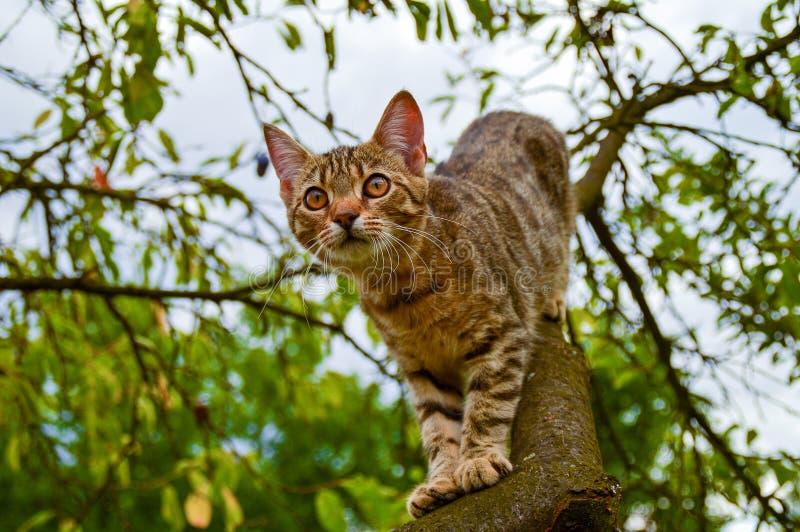 Chat sur un arbre image stock