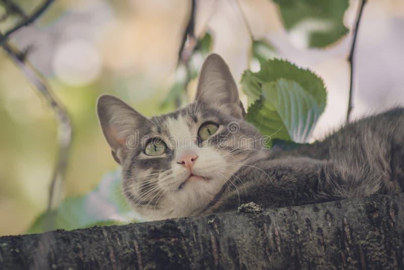 Chat sur un arbre dans le jardin photo libre de droits
