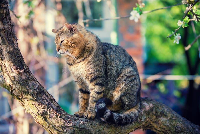 Chat sur une branche d'un pommier image stock