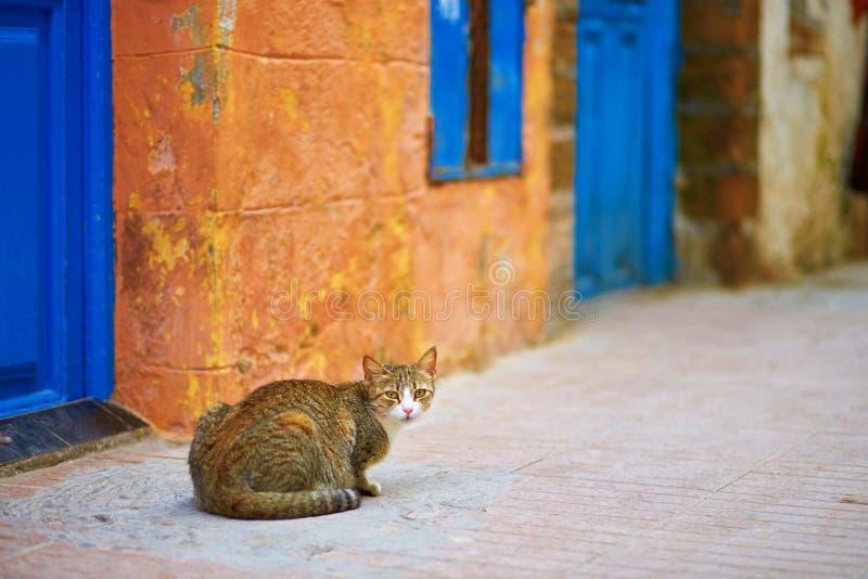 Chat tigré adorable sur une rue dans Essaouira, Maroc images stock