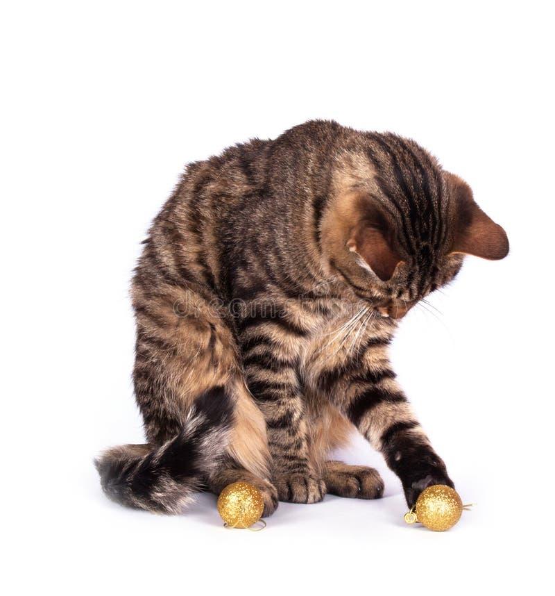 Chat tigré d'isolement photos libres de droits