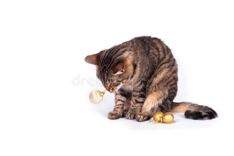 Chat tigré d'isolement image stock