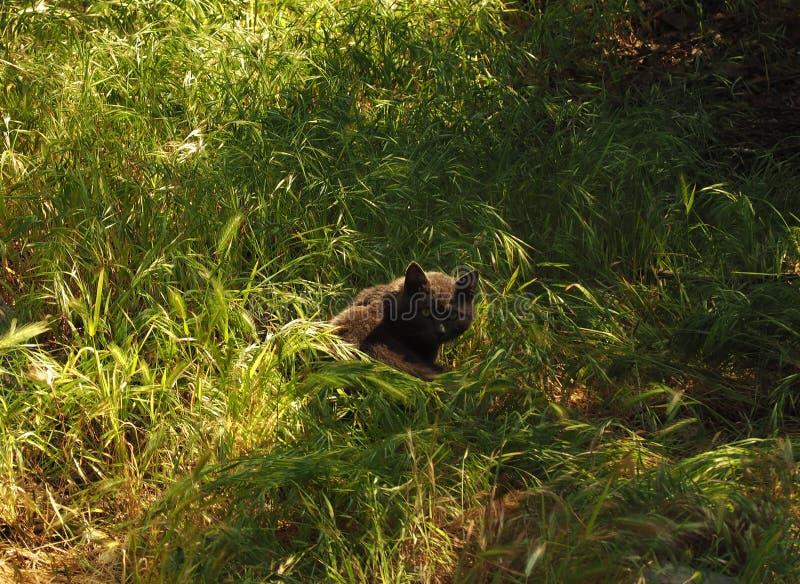 Chat tigré dans l'herbe image libre de droits
