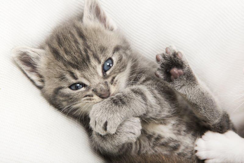 Chat tigré gris de bébé photo libre de droits