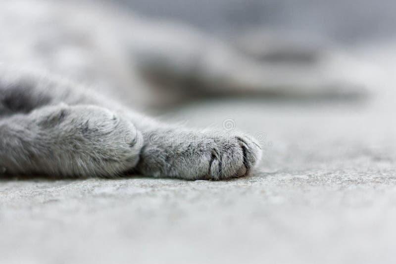 Chat tigré gris dormant sur le trottoir image libre de droits