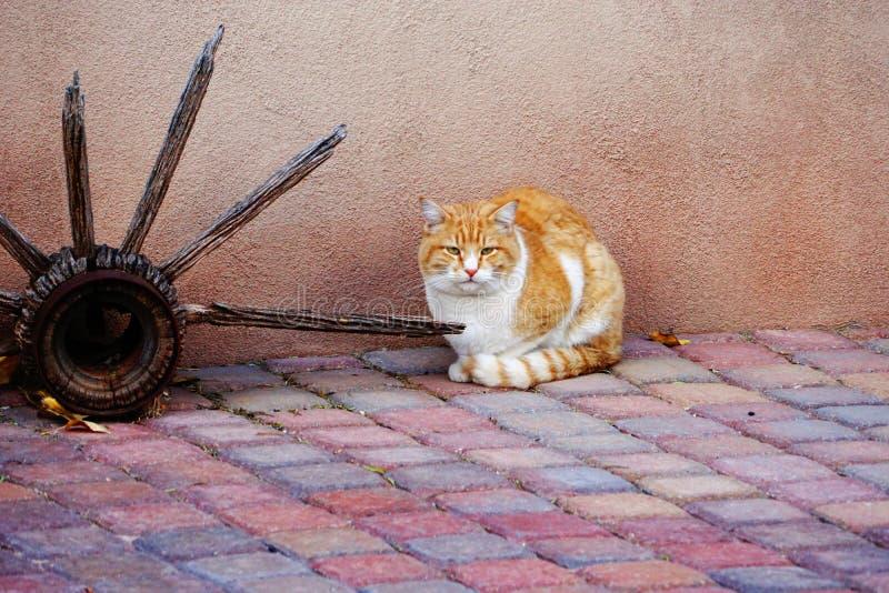 Chat tigré jaune sur le patio images stock