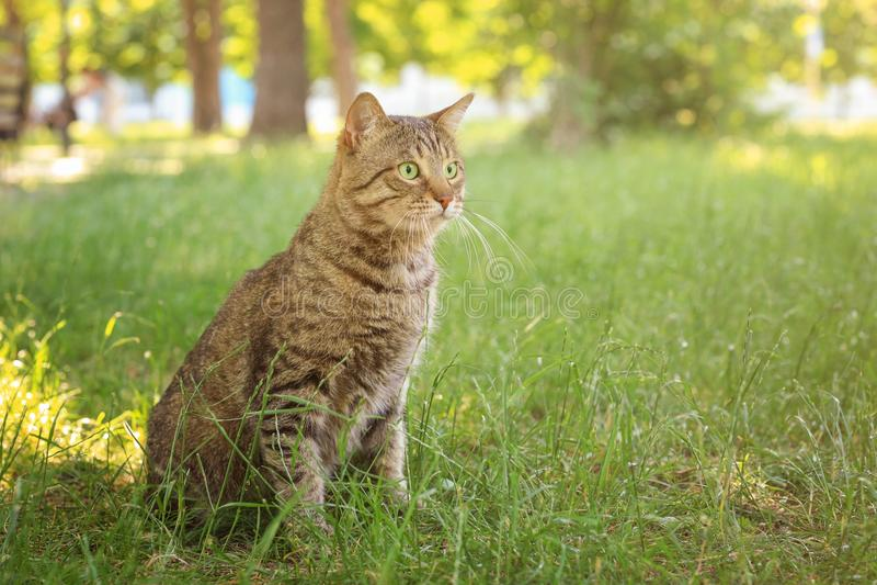 Chat tigré mignon photo stock
