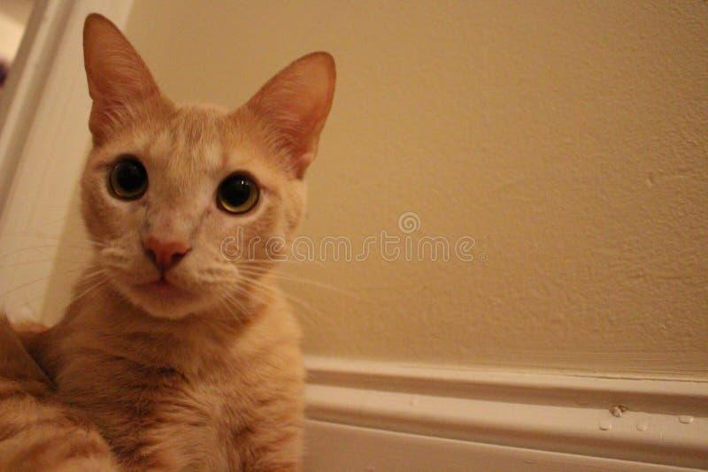 Chat tigré orange contre un mur image libre de droits