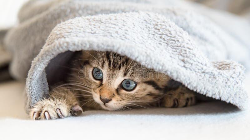Chat tigré se cachant sous la couverture photo libre de droits