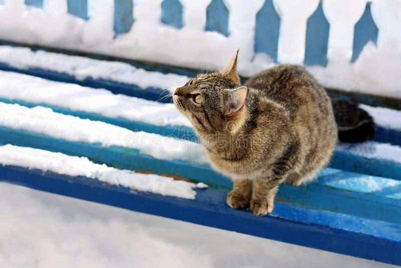 Chat tigré sur le banc couvert de neige photo libre de droits