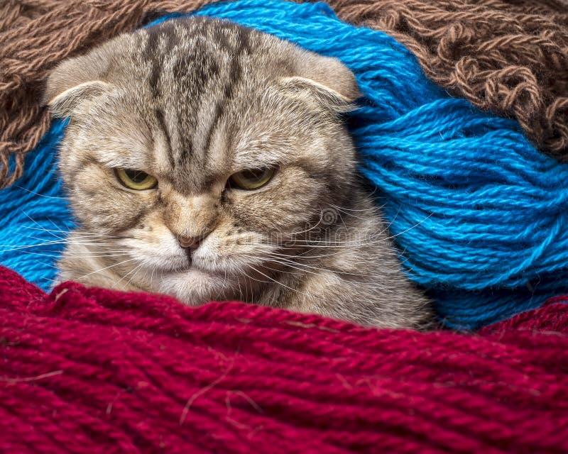 Chat très fâché regardant sévèrement image stock
