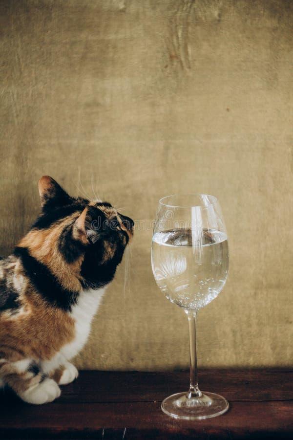 Monsieur De Chat Avec Le Verre De Vin Photo stock Image du