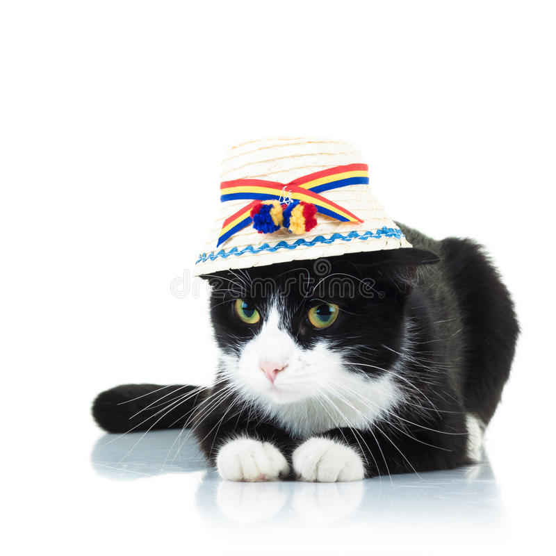 Chat utilisant le chapeau roumain traditionnel des maramures photographie stock