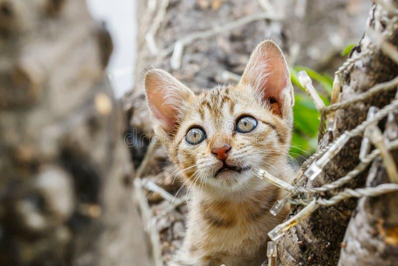 Chat vilain mignon thaïlandais image libre de droits