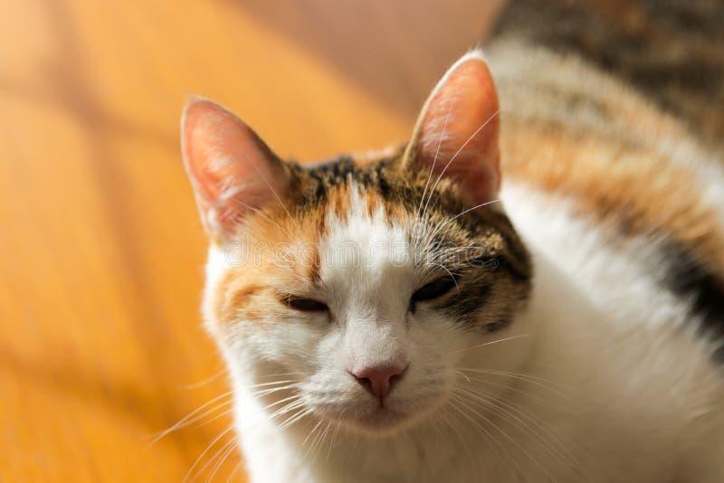 Chat, yellowe et blanc doux photos stock