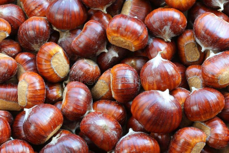Chataîgnes (châtaignes douces) photos stock