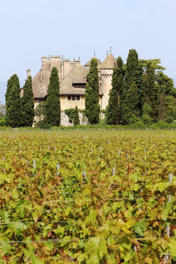 Chateau de Ripaille vineyard, Ripaille, Savoie, France royalty free stock images