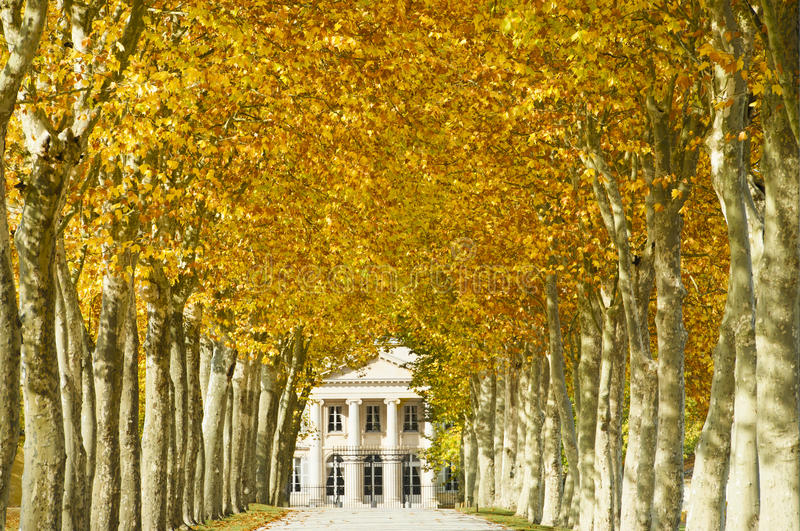 Chateau Margaux, Bordeaux, France. Chateau Margaux in Bordeaux, France, one of the best vineyards in the world, seen in autumn with colored plane tree leaves