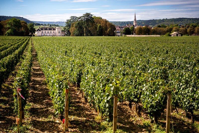 Chateau med vingårdar, Bourgogne, Montrachet france royaltyfria foton