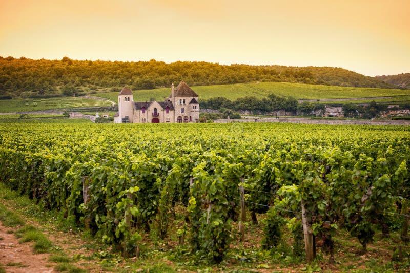 Chateau met wijngaarden, Bourgondië, Frankrijk stock fotografie