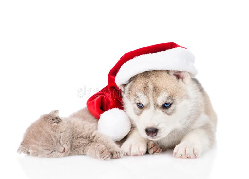 chaton écossais de sommeil et chiot de chien de traîneau sibérien avec le chapeau de Santa D'isolement sur le fond blanc image stock