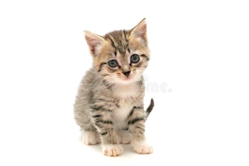 chaton adorable image libre de droits