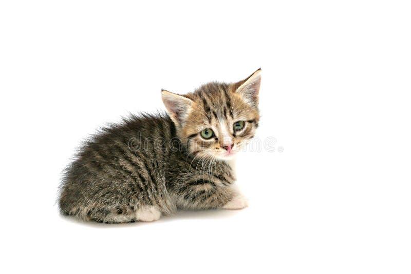chaton adorable image stock