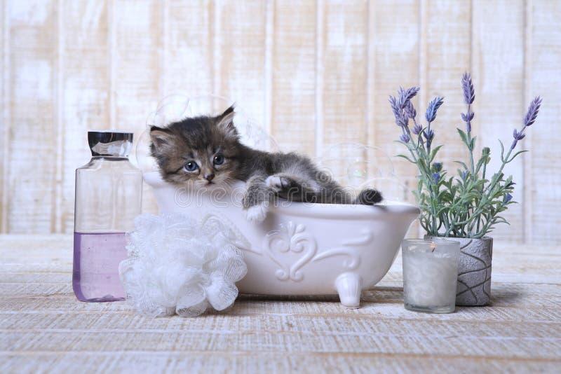 Chaton adorable dans une détente de baignoire image libre de droits