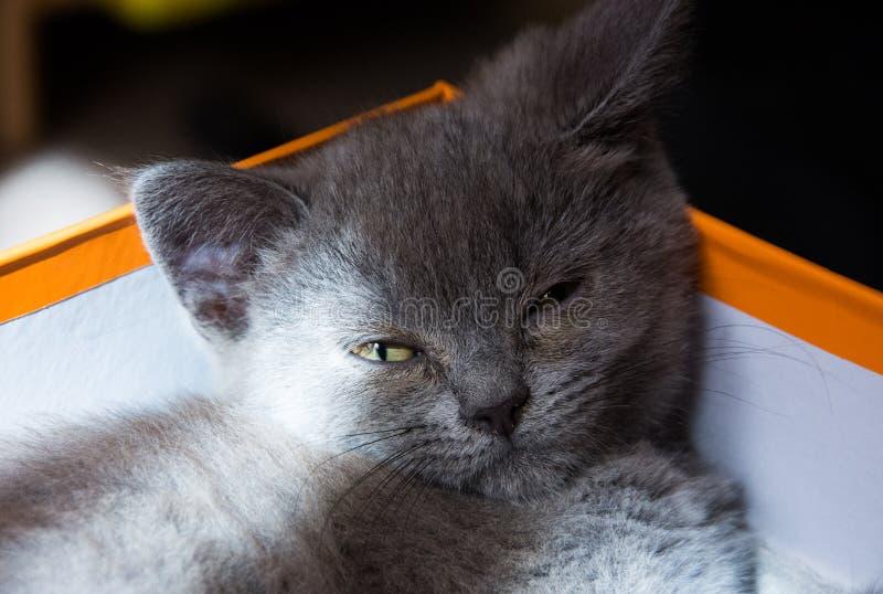 Chaton avec du charme dormant dans une boîte photos stock