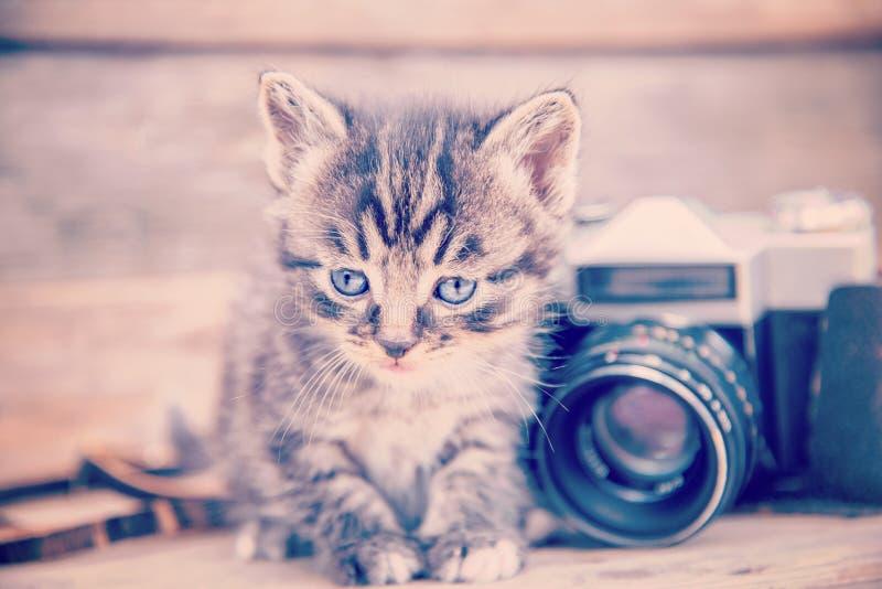Chaton avec l'appareil-photo de photo de vintage photo stock