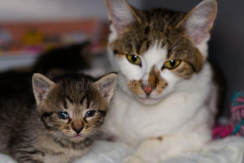 Chaton avec la conjonctivite et sa mère sur le fond brouillé photographie stock libre de droits