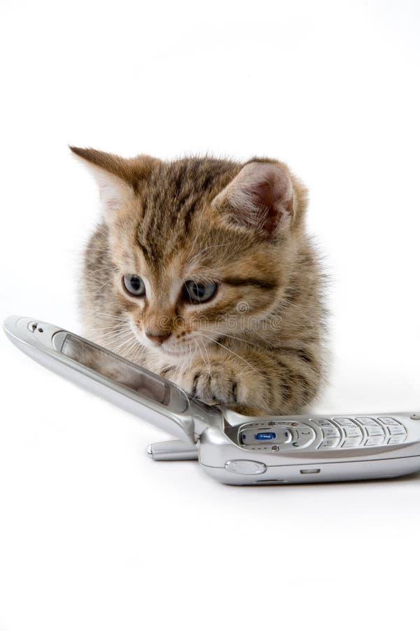 Chaton avec le téléphone portable photographie stock