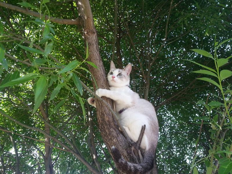 Chaton blanc dans l'arbre image libre de droits
