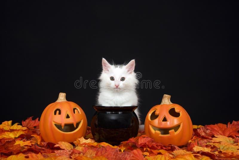 Chaton blanc de Halloween avec les lanternes et le chaudron du cric o photo libre de droits