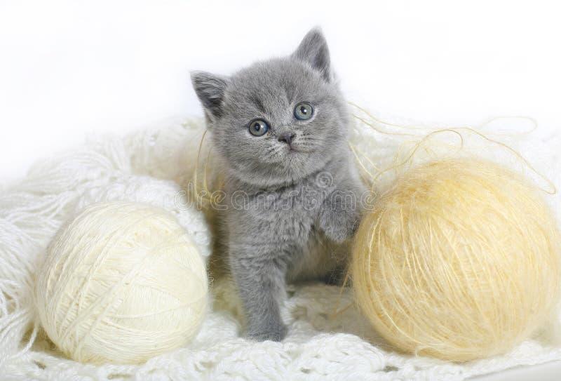 Chaton britannique avec des billes des laines. photographie stock libre de droits