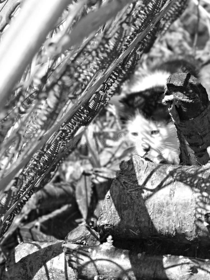Chaton dans -2& de établissement industriel x28 ; noir et blanc et x29 ; photo libre de droits