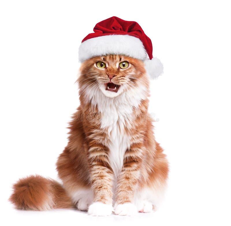 chaton dans le chapeau du père noël image stock