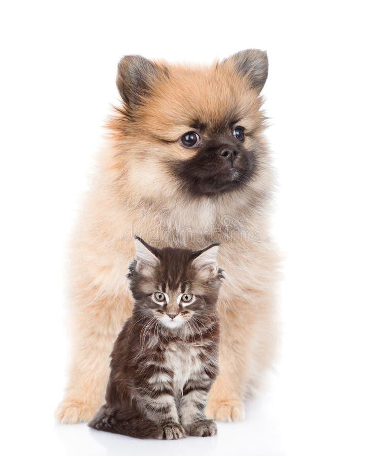 Chaton de chiot de Spitz et de ragondin du Maine se reposant ensemble D'isolement sur le blanc photos libres de droits